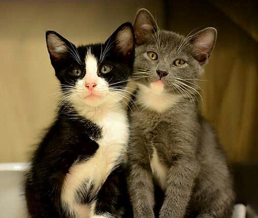 Card Kitten